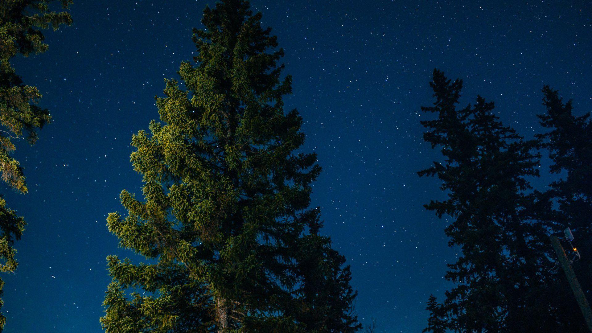 A Guide to Backyard Camping