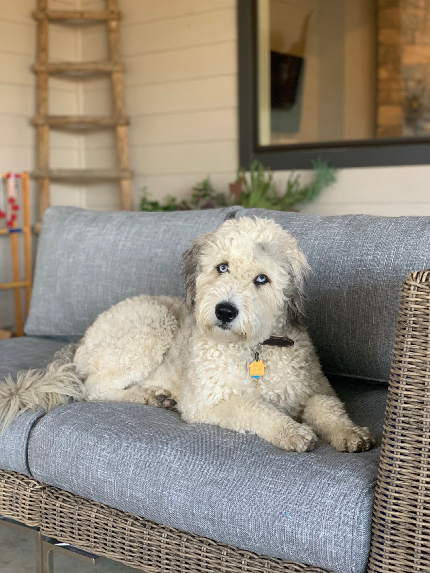 Family dog on patio furniture
