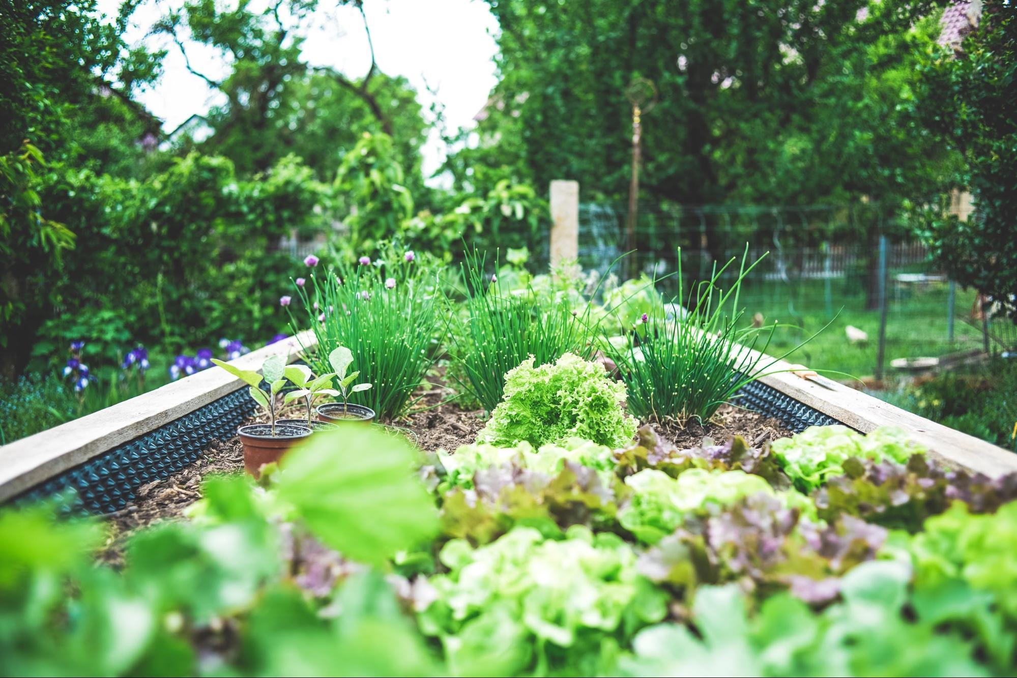 Veggie garden backyard decor