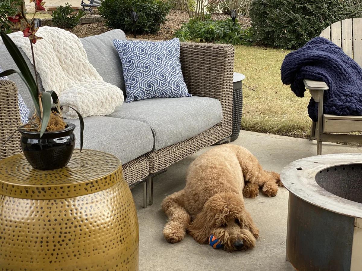 Family dog laying next to garden furniture